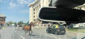 OPINIA CITITORULUI: Un cal a blocat traficul în Târgoviște